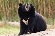 専門家が教える熊と遭遇した時の正しい対処法とは?